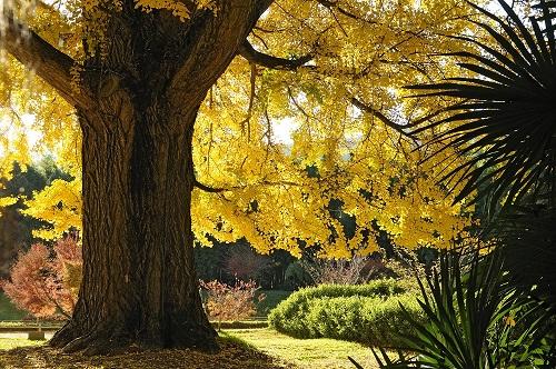 L'arbre aux mille écus