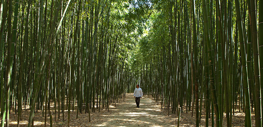 <p>Sometimes bamboo can be giant! Slip into our bamboo groves that reach up to 25 metres high in places. Bamboo is an amazing grass species with an endless range of uses. It's also a real asset for our planet as, like all plants, bamboo absorbs CO2 and releases oxygen, making it the champion of plants that fix and store greenhouse gases.</p>