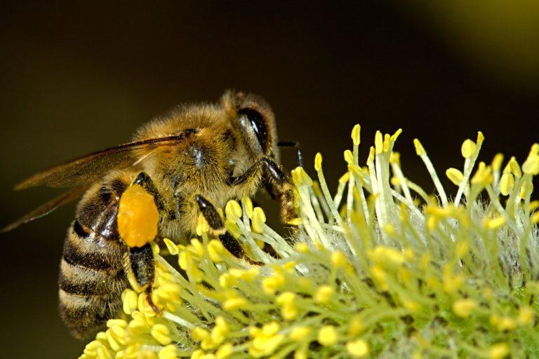 « Bees Kingdom » workshop